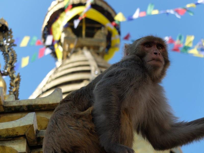Templul Maimutelor.