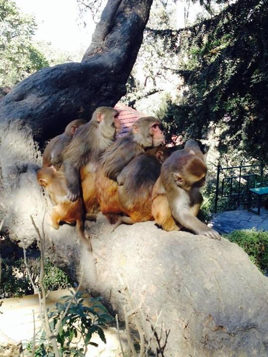 Maimutele de la Templul Maimutelor