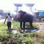 Elefantul face baie